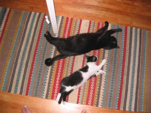 2 cats