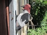 bird feeders, etc. 012