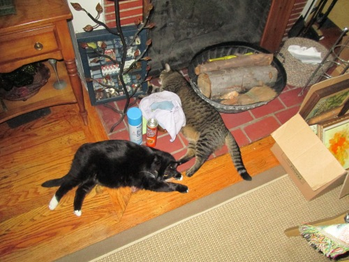 our cats Woody & Cosmo 001