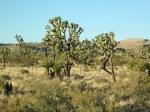 desert 006