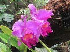 Arboretum june 2013 067