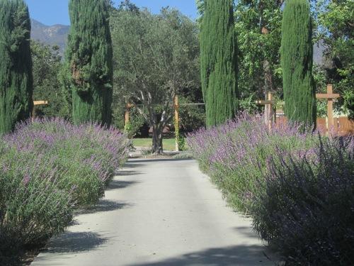 arboretum oct 2013 015