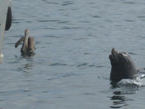 Morro Bay Oct. 13 143