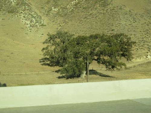 I-5 CA road trip 021