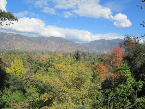 Thanksgiving and Arboretum 085