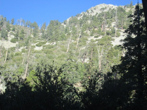 Mt. Baldy on New Years 068