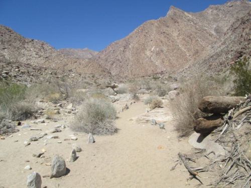 Borrego Springs trip Mar 14 012