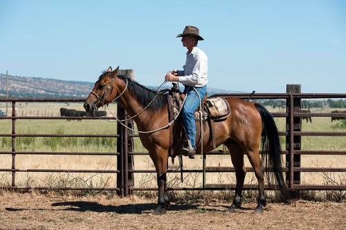 cowboy 1946 red bluff