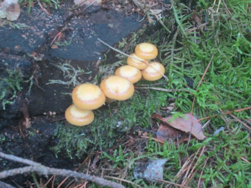 Mushrooms 2 and bike lanes, etc. 098