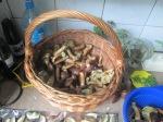 mushrooms , etc. 006