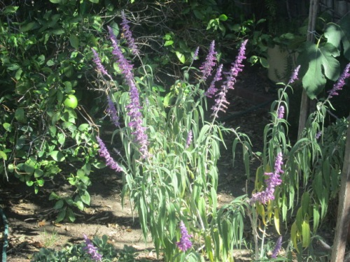 Plants in yard sept 2014 006