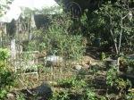 backyard 014