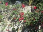 backyard 018
