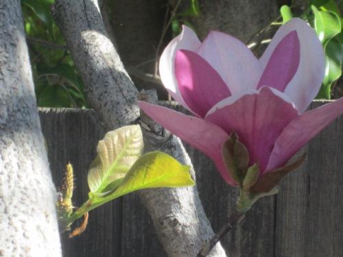 flowers feb.2015 012