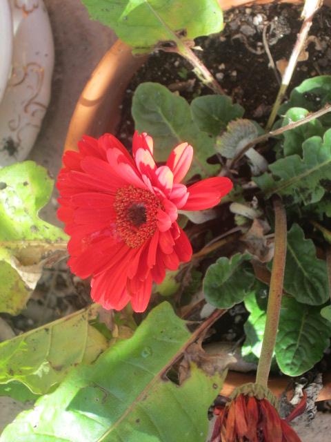flowers feb.2015 043