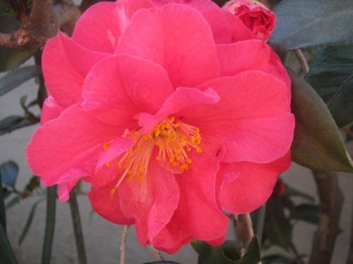 flowers feb.2015 044