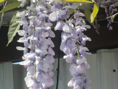 FLOWERS 024