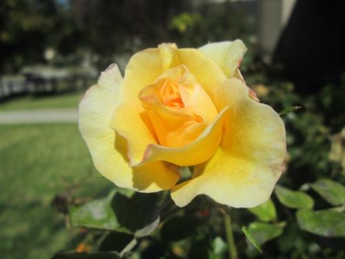 FLOWERS 034