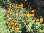 FLOWERS 037