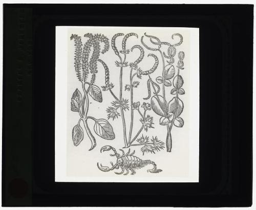 plant , scorpion