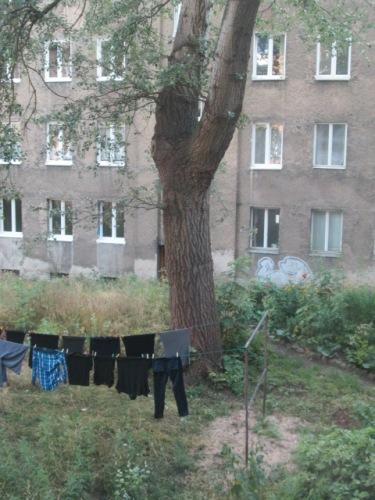 TREE 007