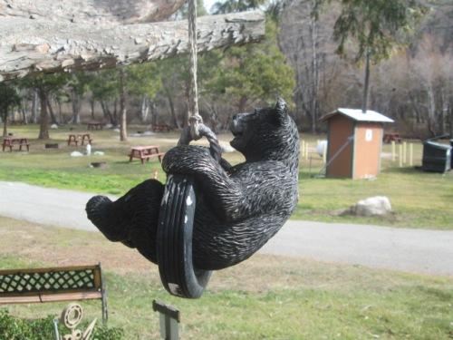 swinging bear