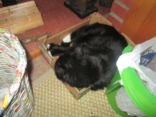 cosmo in box 2