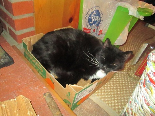 cosmo in box