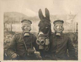 gas-masks-and-donkey