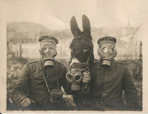 gas-masks-and-donkey