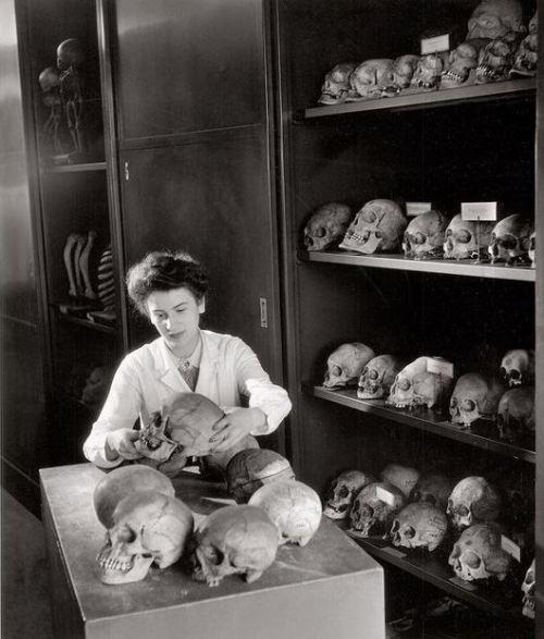 skull museum