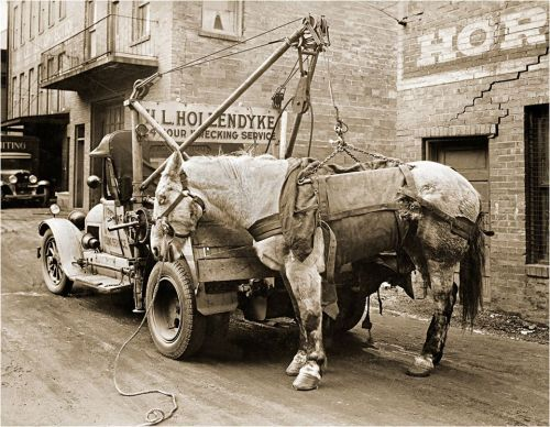 horse tow truck