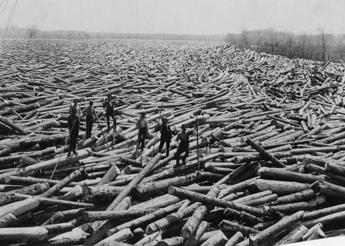 logs 1907