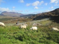 IRELAND trip Oct.2018 053